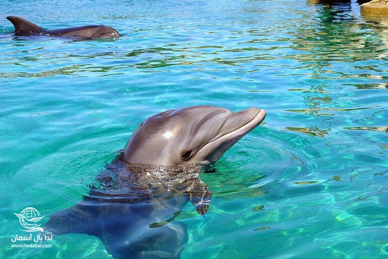 پارک دلفین کیش یکی از برنامه های مفرح تور کیش با آژانس ندا بال