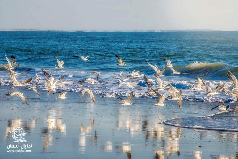تصویری از ساحل جزیره قشم